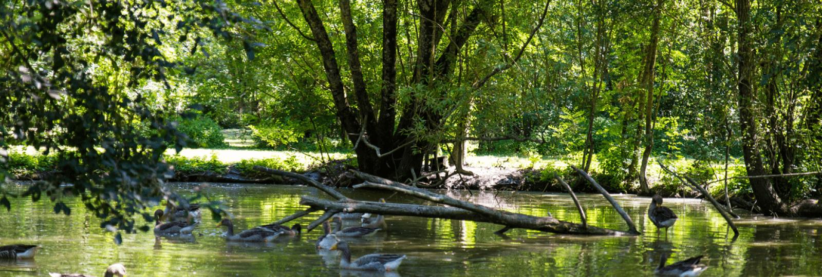 Oiseaux du Marais poitevin