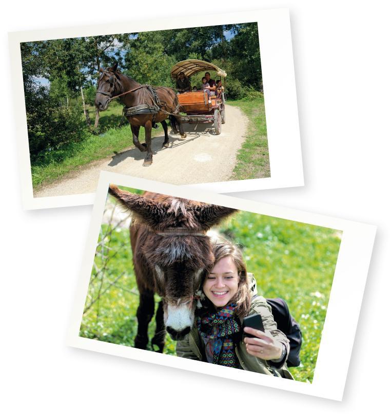 Escapade nature dans le marais : balade en calèche et visite du parc des oiseaux du Marais poitevin