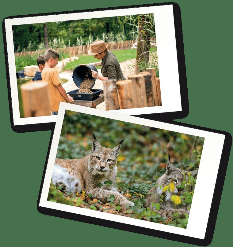 Soigneur animalier Zoodyssée en famille