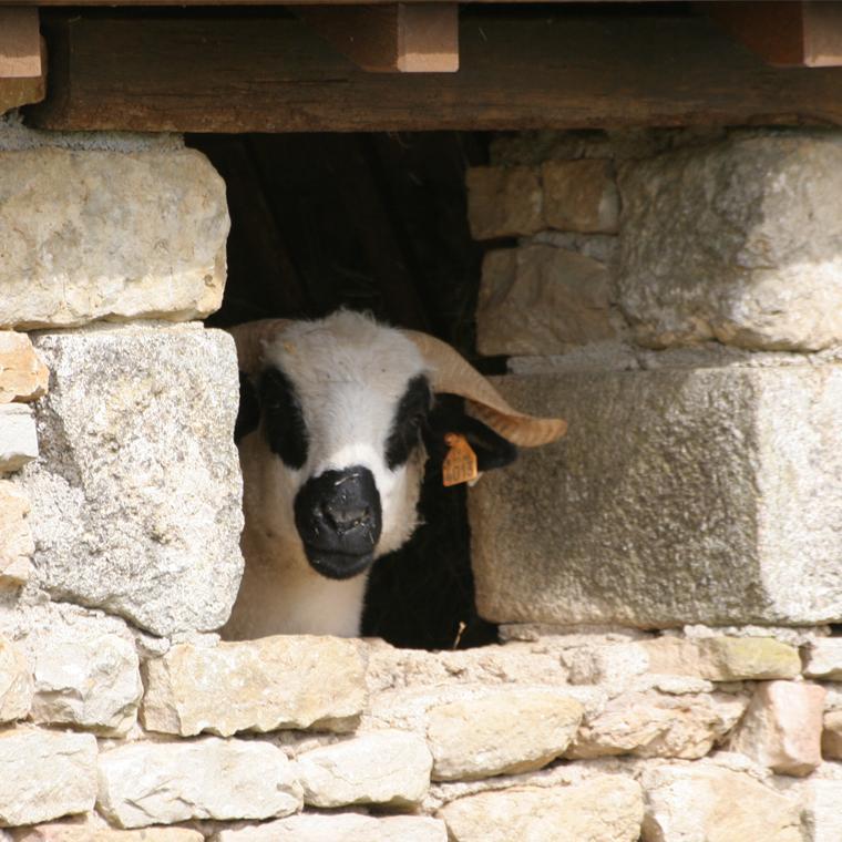Mouton Village à Vasles