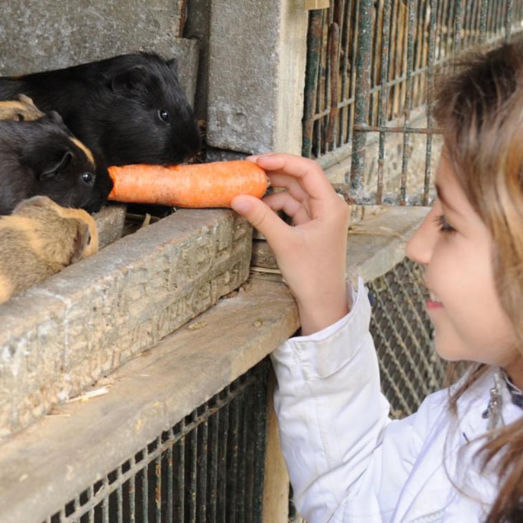 Soigne les animaux