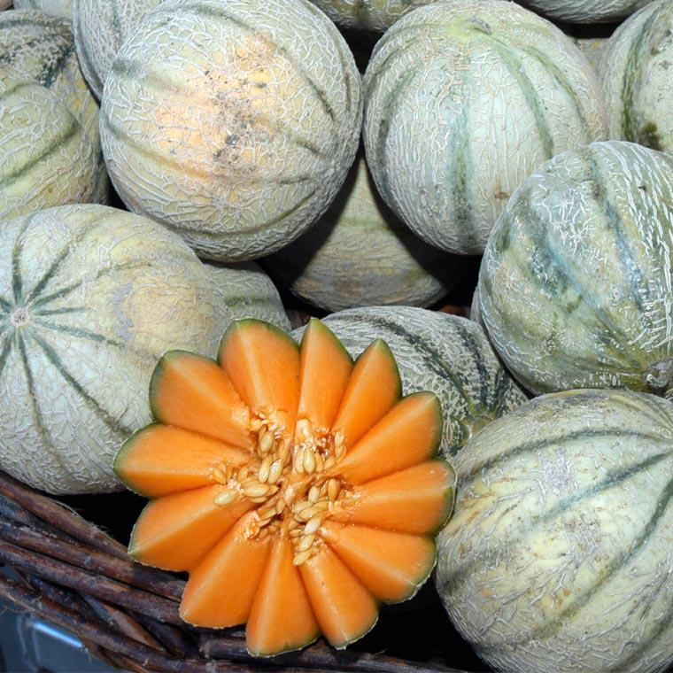 Melon du Poitou et duhomard